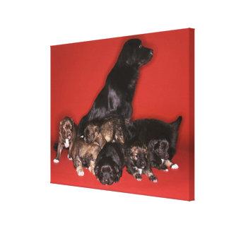 Perro de la madre con los perritos lienzo envuelto para galerias