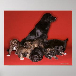 Perro de la madre con los perritos poster