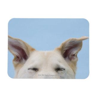 perro de la Mezclado-raza, primer en la cabeza y o Imán Flexible
