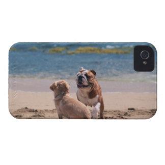 Perro de la playa de Sandy iPhone 4 Case-Mate Cárcasas