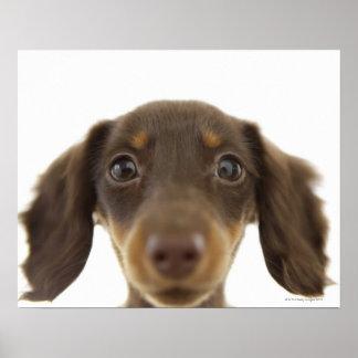 Perro de la salchicha de Frankfurt (marrón) 2 Impresiones
