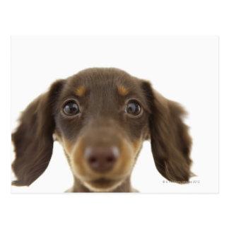 Perro de la salchicha de Frankfurt (marrón) 2 Postal