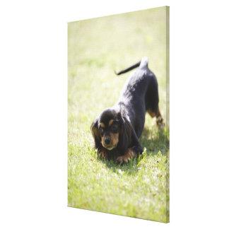 Perro de la salchicha de Frankfurt (negro) Impresión En Lienzo Estirada