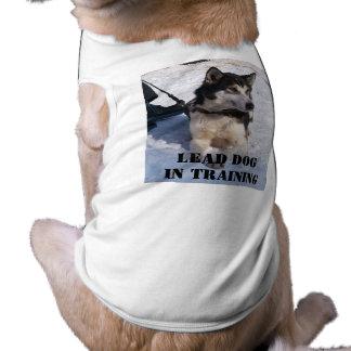 Perro de la ventaja en el entrenamiento playera sin mangas para perro