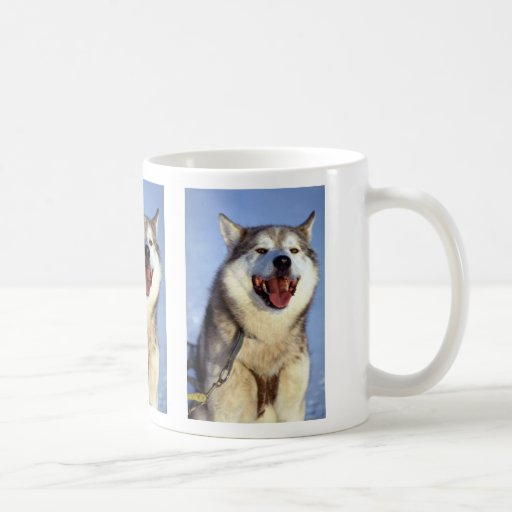 Perro de la ventaja taza de café
