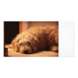 Perro de Labradoodle que parece triste Plantilla Para Tarjeta De Foto