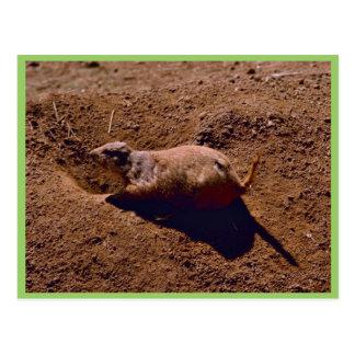 Perro de las praderas de cola negra tarjetas postales
