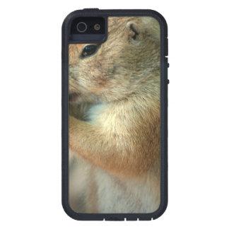 Perro de las praderas iPhone 5 coberturas