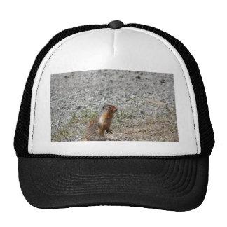 Perro de las praderas gorra