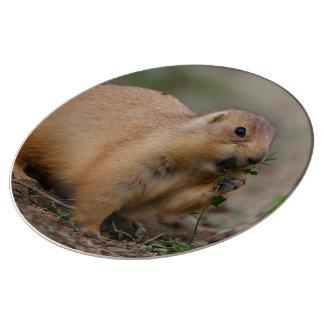 perro de las praderas platos de cerámica
