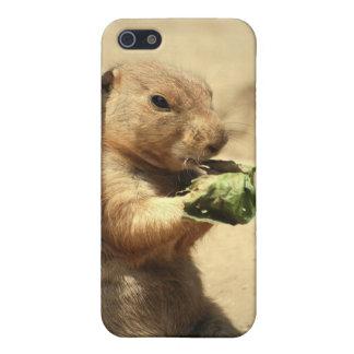 Perro de las praderas que cuelga hacia fuera la ca iPhone 5 protectores