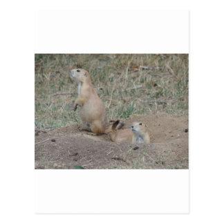 Perro de las praderas postal