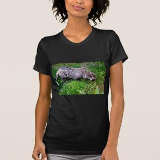 Perro de mapache en hierba camisas