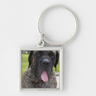 Perro de Mastif del inglés en Bryon, Ohio. 2 Llavero Cuadrado Plateado