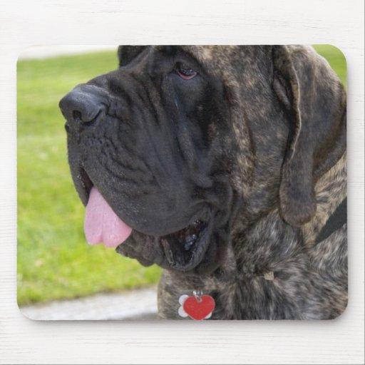 Perro de Mastif del inglés en Bryon, Ohio Tapete De Ratón
