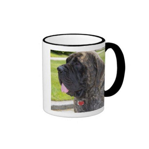 Perro de Mastif del inglés en Bryon, Ohio Taza
