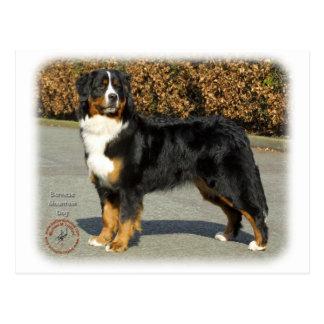 Perro de montaña de Bernese 9T066D-133 Tarjetas Postales
