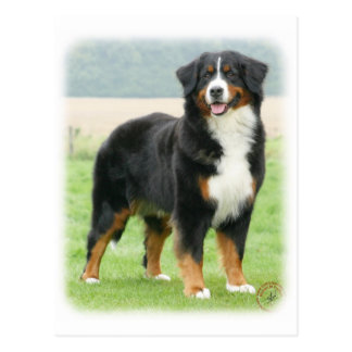 Perro de montaña de Bernese 9Y066D-133 Tarjetas Postales