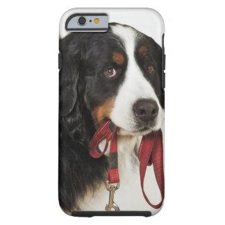 Perro de montaña de Bernese (Berner Sennenhund) Funda Para iPhone 6 Tough