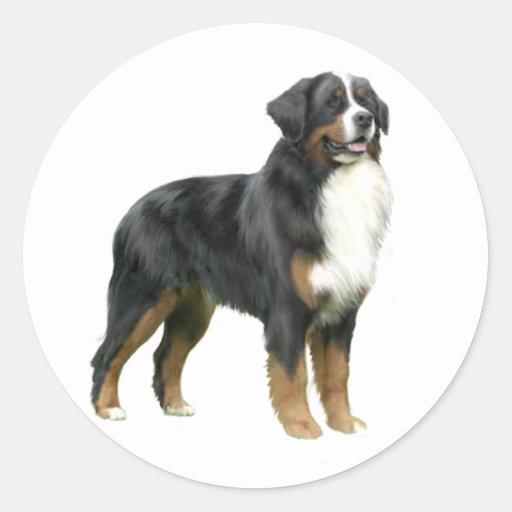 Perro de montaña de Bernese - colocándose Pegatina Redonda