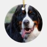 Perro de montaña de Bernese con los ornamentos gra Ornamentos De Navidad