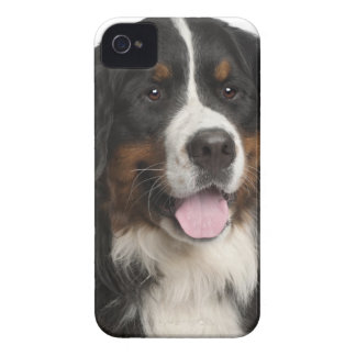 Perro de montaña de Bernese (de 1 año) Carcasa Para iPhone 4