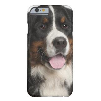 Perro de montaña de Bernese (de 1 año) Funda De iPhone 6 Barely There