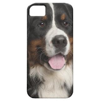 Perro de montaña de Bernese (de 1 año) iPhone 5 Cobertura