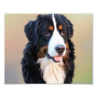Perro de montaña de Bernese, el perro obediente Fotografía