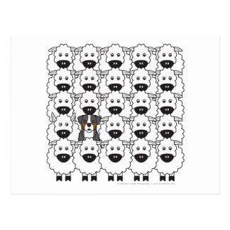 Perro de montaña de Bernese en las ovejas Tarjeta Postal