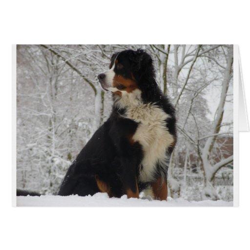 Perro de montaña de Bernese Felicitación