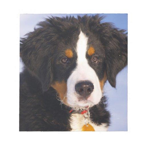 Perro de montaña de Bernese - foto linda del perri Libretas Para Notas