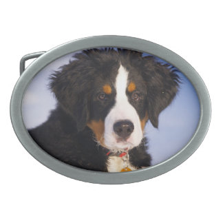 Perro de montaña de Bernese - foto linda del perri Hebilla De Cinturón Oval