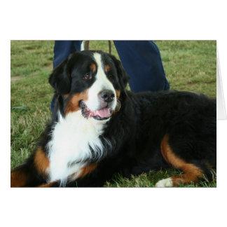 Perro de montaña de Bernese Tarjeta De Felicitación