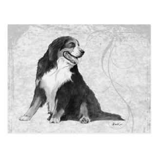 Perro de montaña de Bernese Tarjeta Postal
