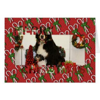 Perro de montaña de Bernese y foto del navidad de  Felicitacion