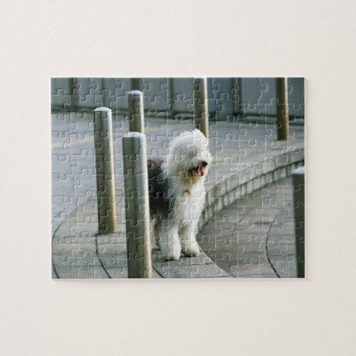 Perro de ovejas inglés viejo 2 puzzle