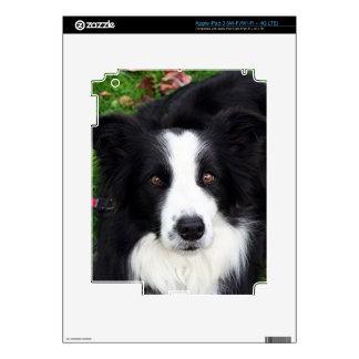 Perro de ovejas negras y blancas iPad 3 pegatinas skins