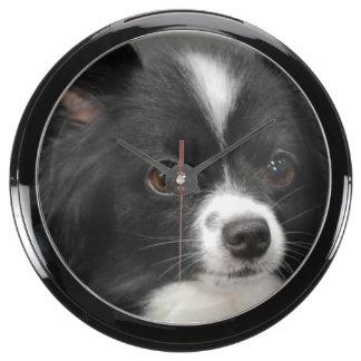 Perro de Papillon Reloj Aqua Clock