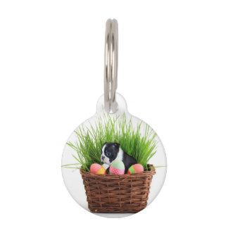 Perro de Pascua Boston Terrier
