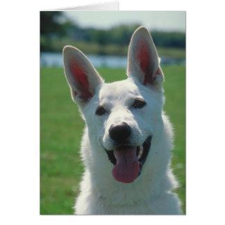 Perro de pastor alemán blanco tarjeta de felicitación