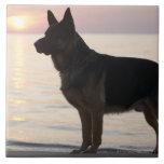Perro de pastor alemán en la bahía georgiana, Onta Azulejo Ceramica