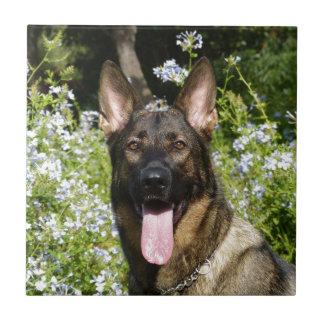 Perro de pastor alemán hermoso azulejo