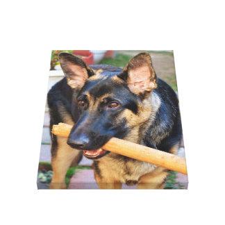 Perro de pastor alemán impresión de lienzo