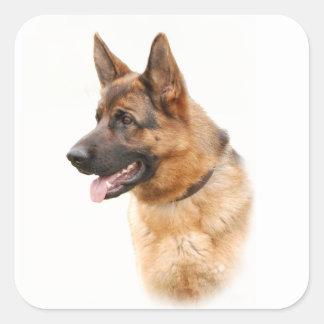 Perro de pastor alemán pegatina cuadrada