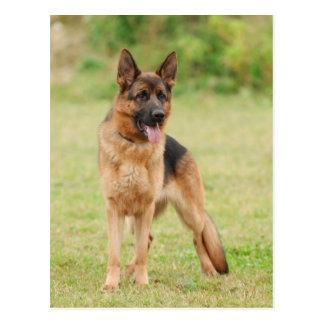 Perro de pastor alemán tarjetas postales