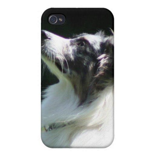 Perro de pastor australiano iPhone 4 funda
