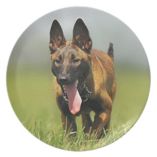 Perro de pastor belga plato para fiesta