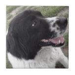 Perro de pastor búlgaro de Sara Teja Cerámica