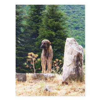 Perro de pastor de Anatolia - Ephesus, Turquía Tarjetas Postales